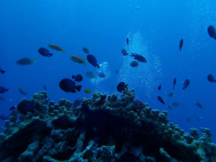 サンゴ礁と魚の群れ