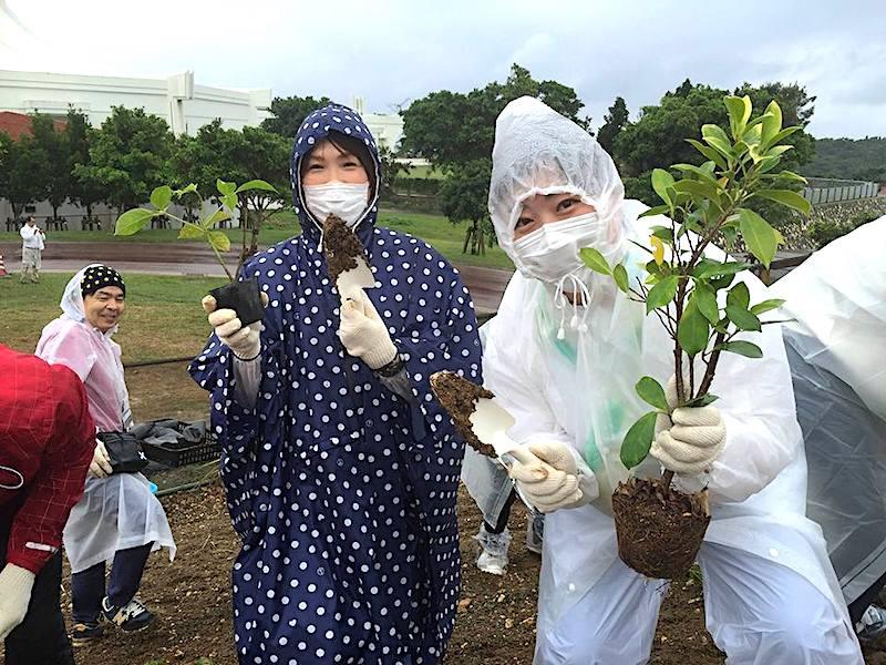 沖縄の植樹