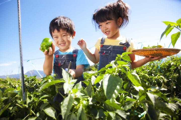 収穫体験をする子どもたち