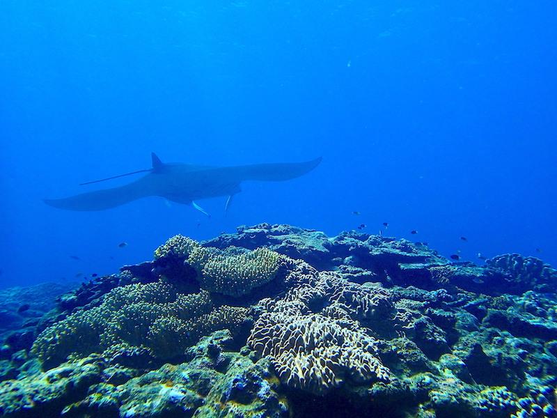 サンゴ礁の写真
