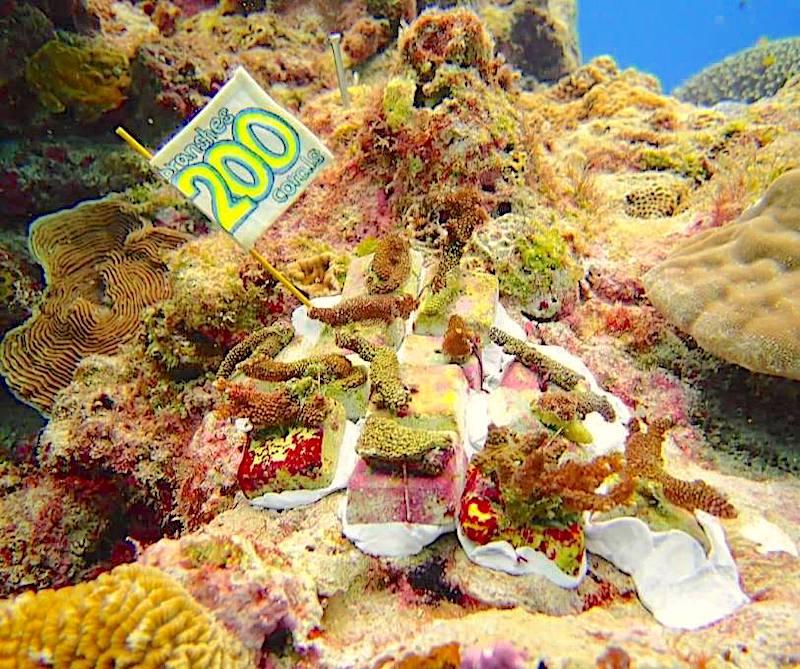 200株記念サンゴ