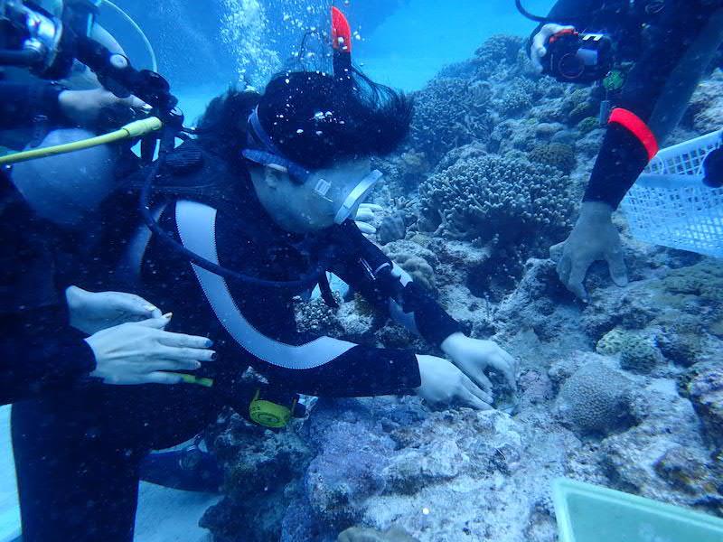 サンゴを固定する様子