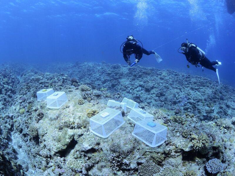 サンゴ完成