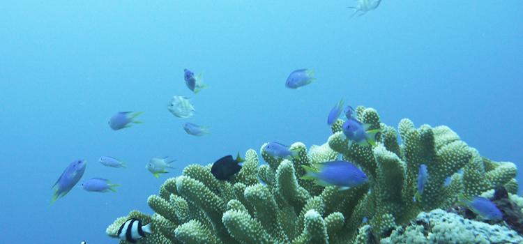 サンゴの森