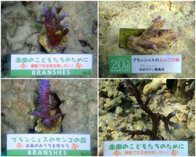 ブランシェス サンゴ
