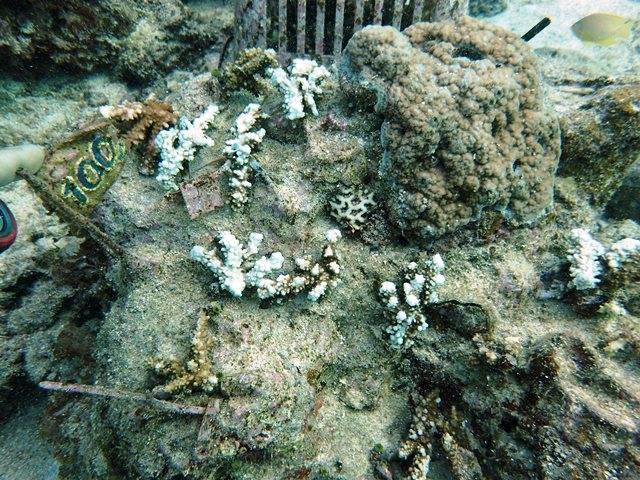 1月計測サンゴ全体