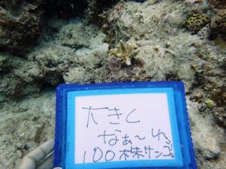 サンゴ大きくなあれ