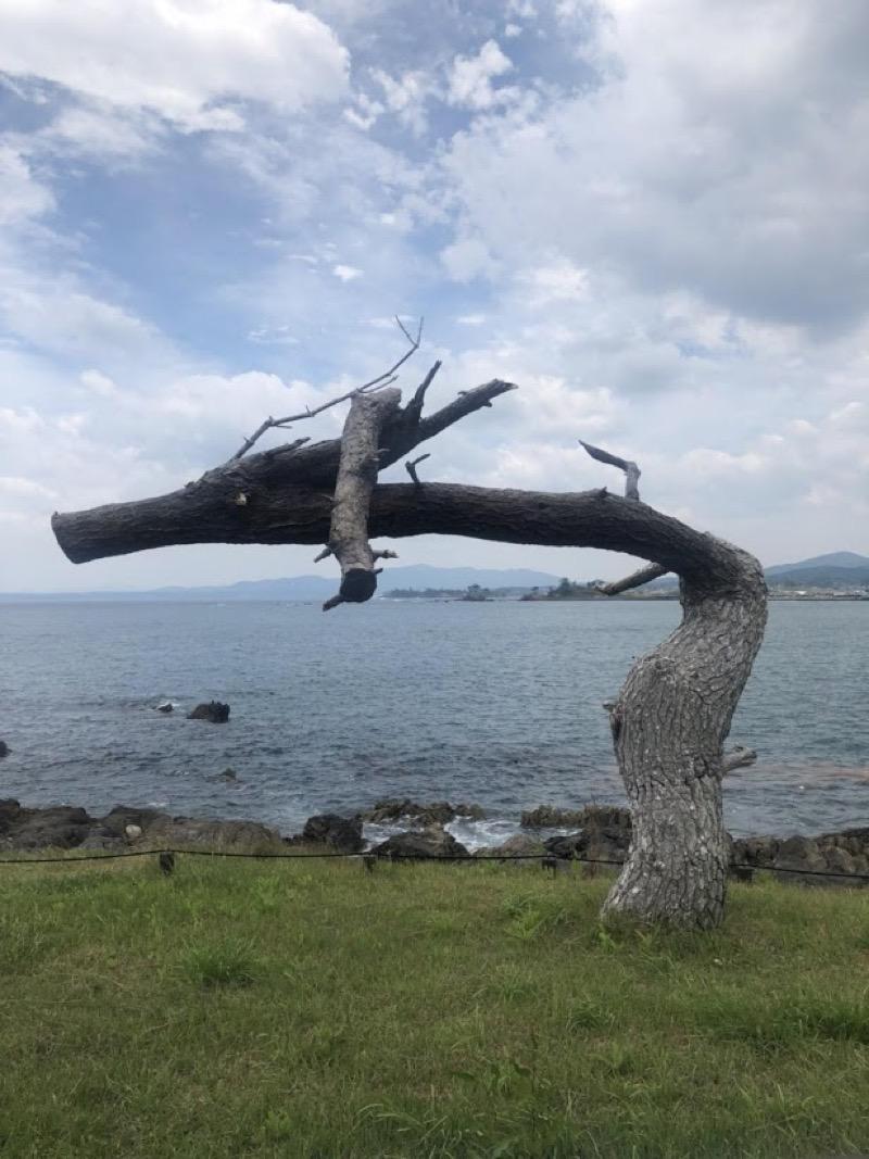 津波があっても残された松の木