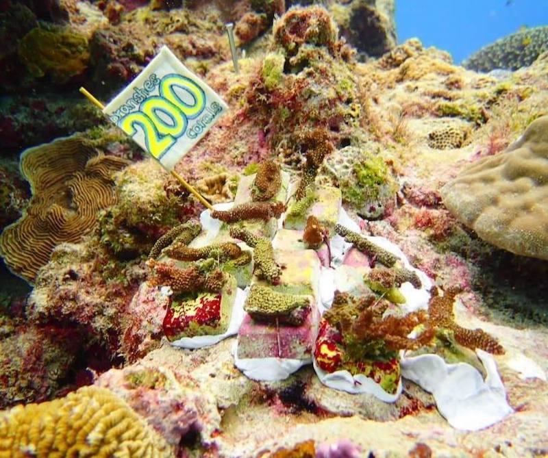 200株サンゴ