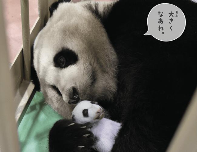 ガックリするパンダ