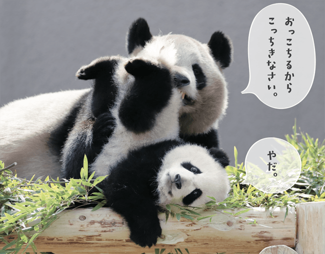 子パンダを抱く母パンダ