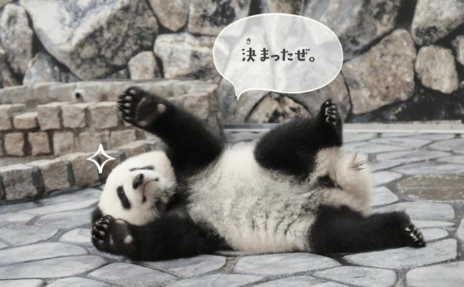 ポーズをとるパンダ