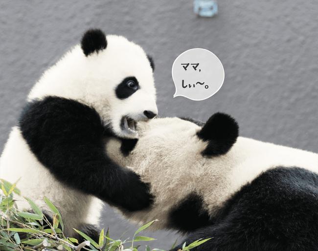 パンダの親子の会話