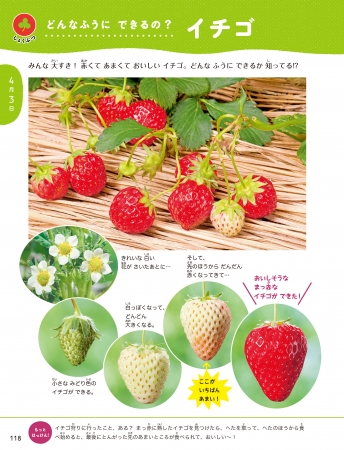 4月3日 「イチゴ」の成長