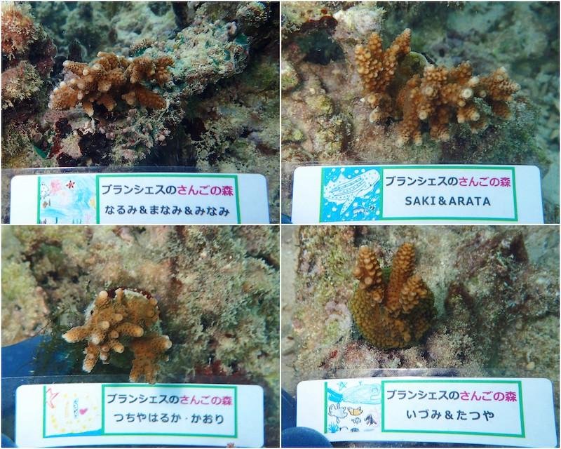 2020年7月23日サンゴ植樹