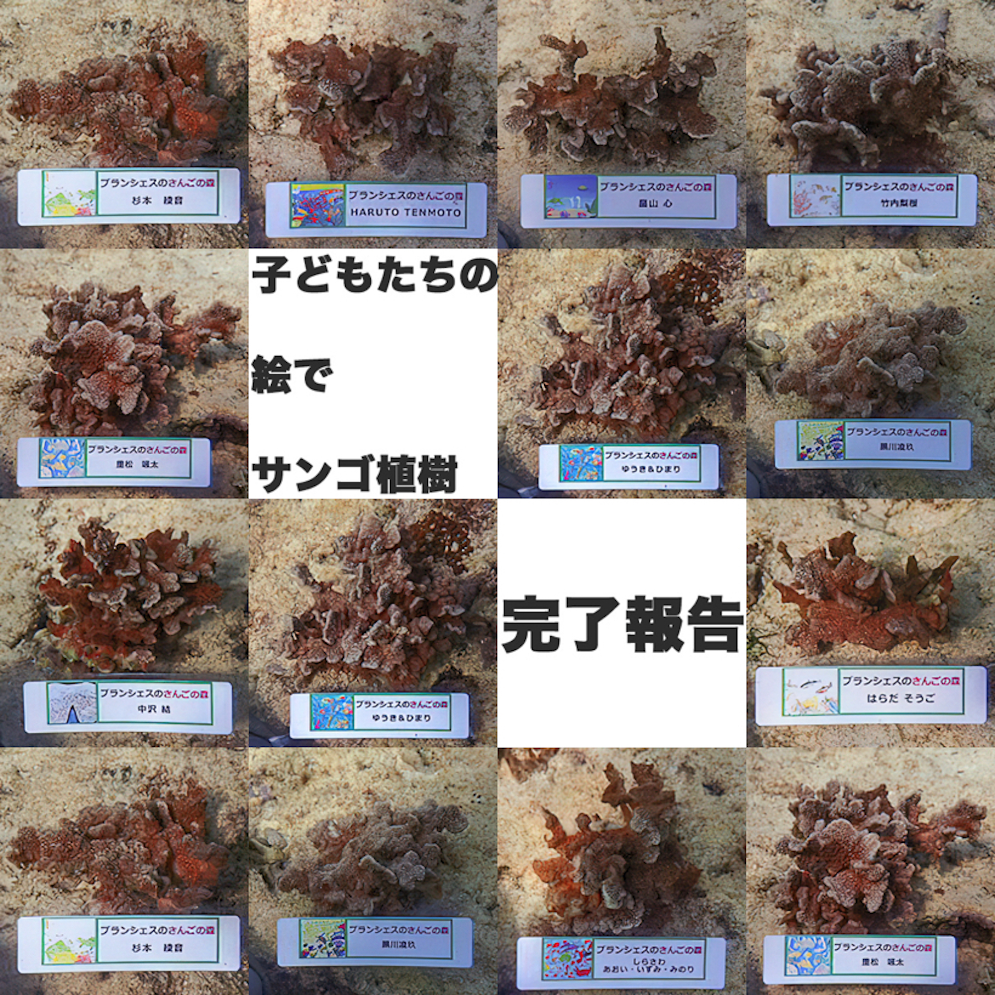 サンゴ植樹