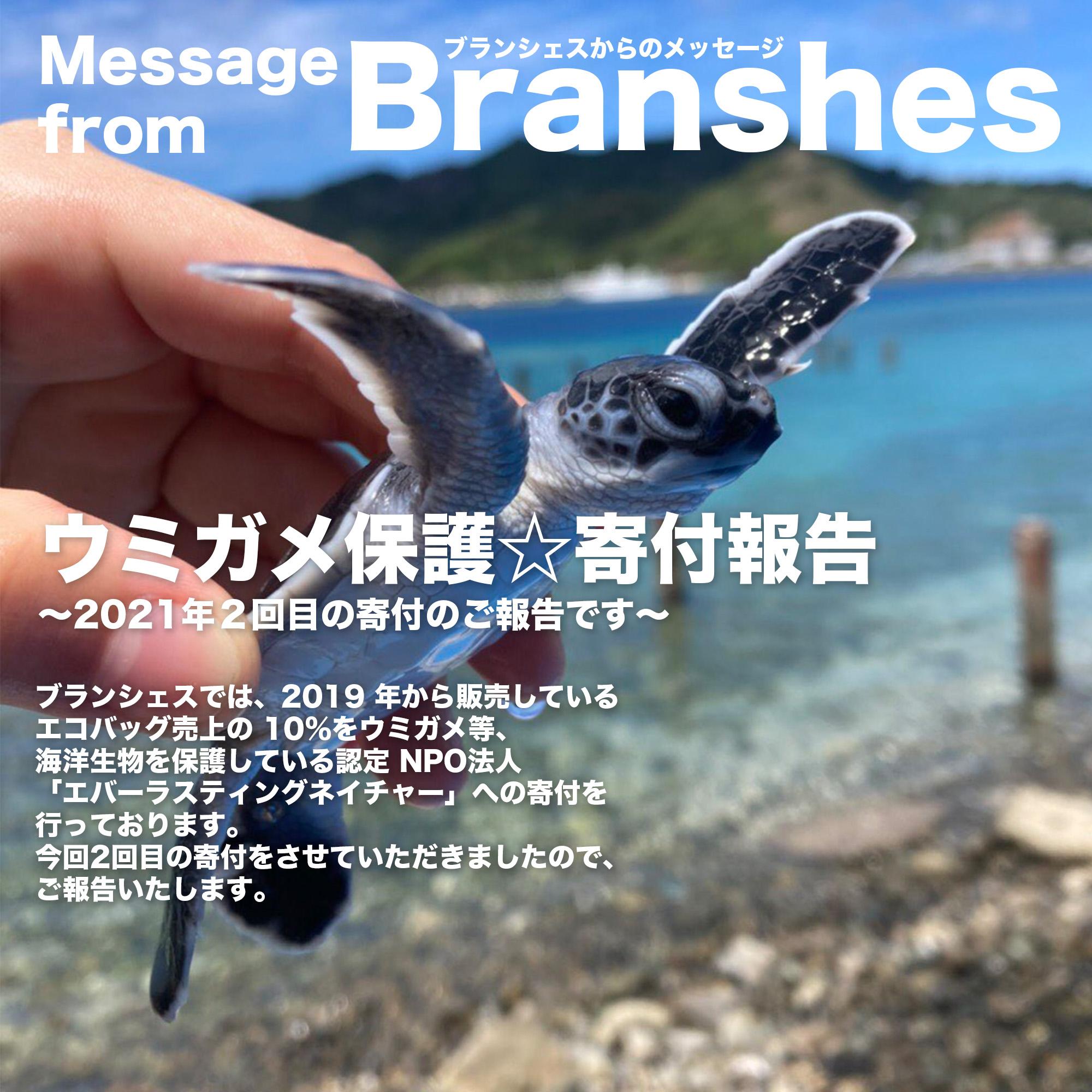 ウミガメ保護寄付報告